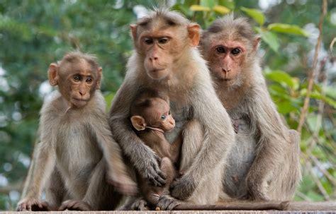 gambar monyet lengkap gambar foto
