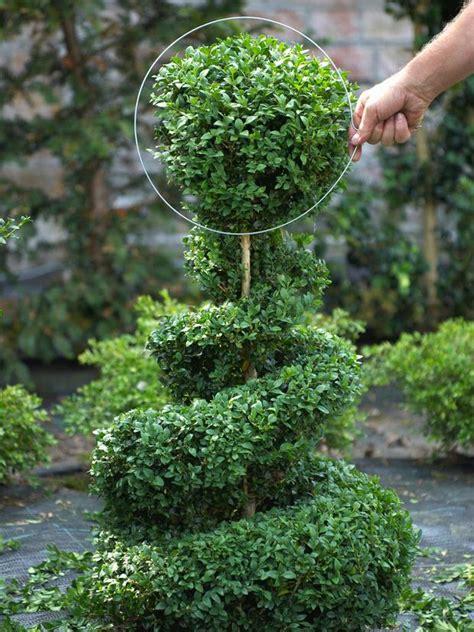 Diy Garden Topiary Projects  The Garden Glove