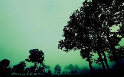 Dark Forest Desktop Backgrounds Misty Wallpapers Creepy