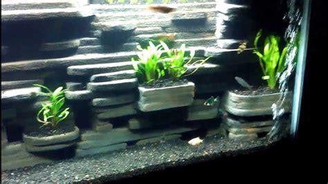 bureau veritas levallois aquarium diy 28 images kaylen s discus diy aquarium