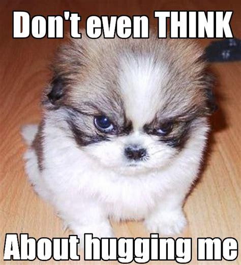 Grumpy Dog Meme - grumpy dog doesnt like hugs funny meme funny memes