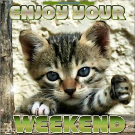 enjoy  weekend cute kitten days weekend