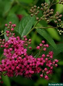 Pflanze Mit Roten Blüten : plantr seite 19 von 30 das bl hfreudige fotoblog ~ Eleganceandgraceweddings.com Haus und Dekorationen