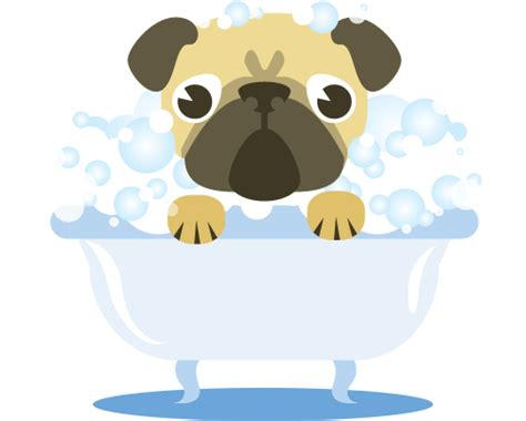 The Ultimate Guide To Dog Cleaning And Grooming