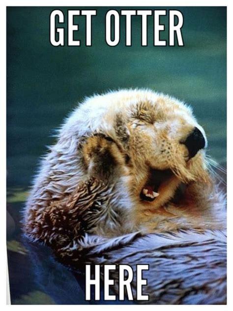 Otter Love Meme - best 20 otter meme ideas on pinterest