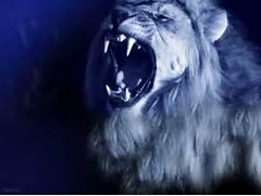 lion roar wallpaper li...