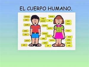Partes Del Cuerpo Humano En Ingles Espanol