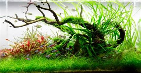 Setting Aquascape by Setting Up A High Energy Planted Aquarium Aquascaping