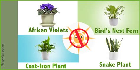 desk plants that don t need sunlight dress up your home with these indoor plants that don 39 t
