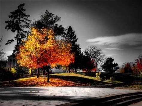 Selective Coloring When Just A Little Bit Of Color Is Enough