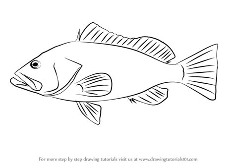 grouper draw drawing step drawingtutorials101 previous