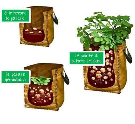 coltivare patate in vaso come coltivare patate nel sacco in vaso o in un bidone