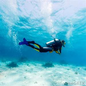 The gallery for --> Person Diving Underwater