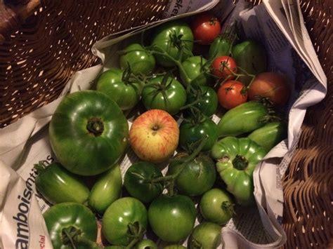 comment cuisiner les tomates vertes comment faire mûrir les tomates vertes de fin de saison