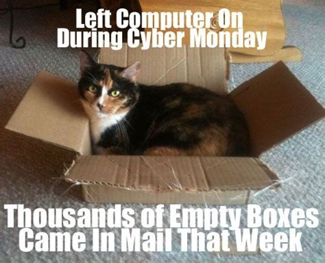 Cyber Monday Meme - cats love boxes meme catmeme funny animals with captions pinterest cats mondays and the