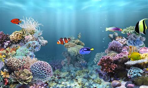 anipet marine aquarium hd android apps on play