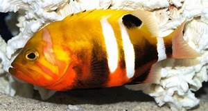 Top 10 Most Expensive Saltwater Fish | Tropical Fish