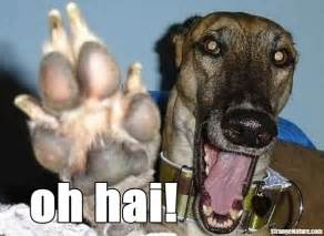 Funny Animals Saying Hello
