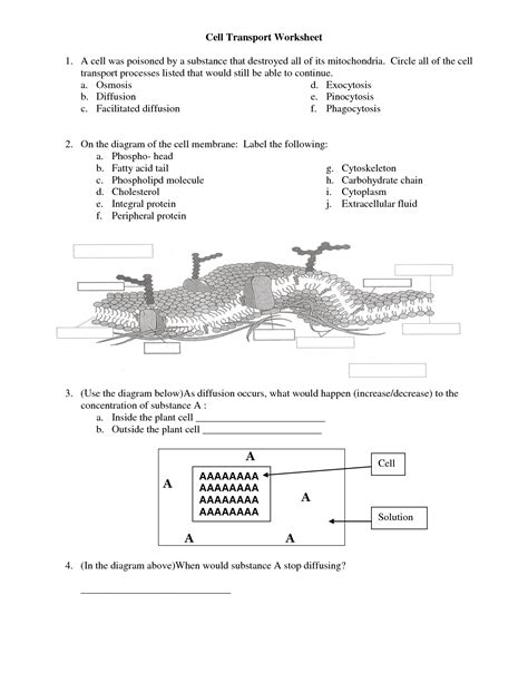 12 Best Images Of Cell Membrane Coloring Worksheet Answers  Cell Membrane Coloring Worksheet