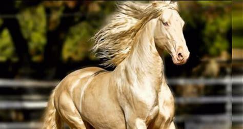 horse fun shared