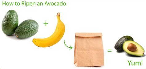 how to ripen avocados avocados super food pit stops