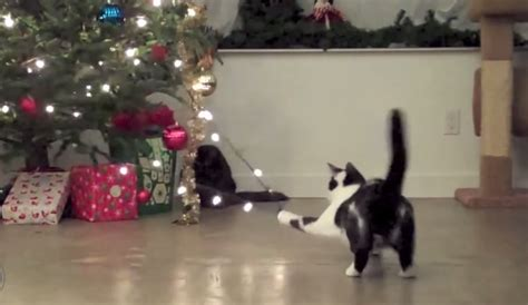 cat first seen christmas tree 50 cats who want you to take your cheer and shove it three curly