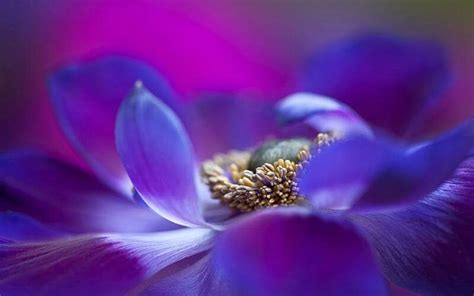 beautiful macro flower pictures