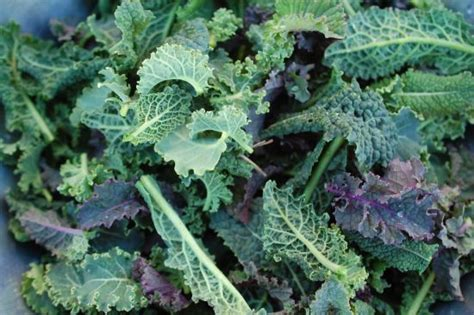 Image result for images baby kale