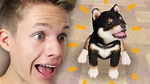 Ich Suche Einen Großen Hund : ich kaufe einen hund youtube ~ Jslefanu.com Haus und Dekorationen
