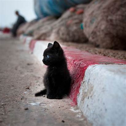 Animals Adorable Cat Animal Extremely Amazing Kitten