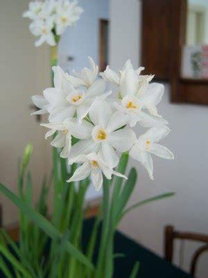 fiori profumati invernali l aiuola odorosa fiori invernali casalinga natura