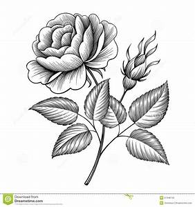 flowers engraving - Hledat Googlem   flowers   Pinterest ...