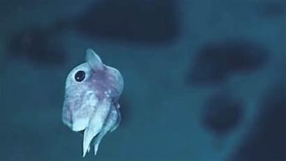 Sea Deep Creatures Atlantic Ocean Species Feet