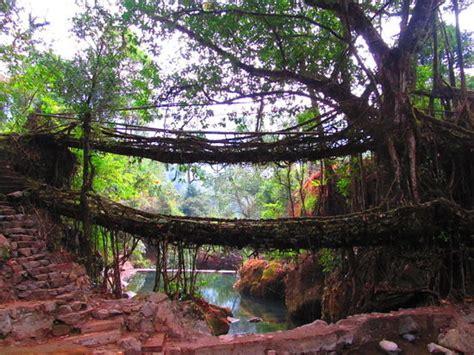 Double Decker Living Root Bridge (cherrapunjee, India