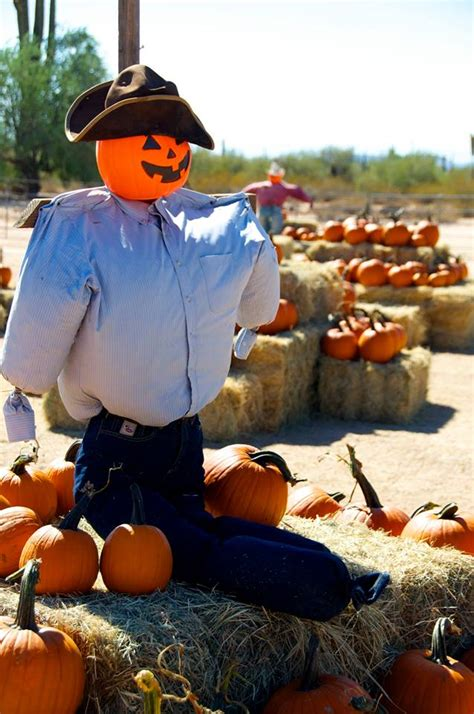 Pumpkin Patch Tucson Az Ajo by 11 Pumpkin Patches To Visit In Arizona