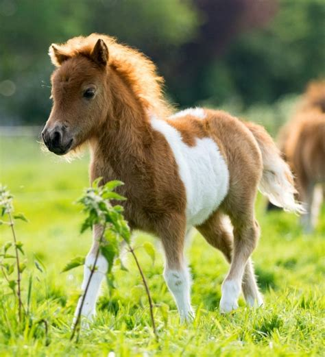 horse baby pony horses facts let check racing