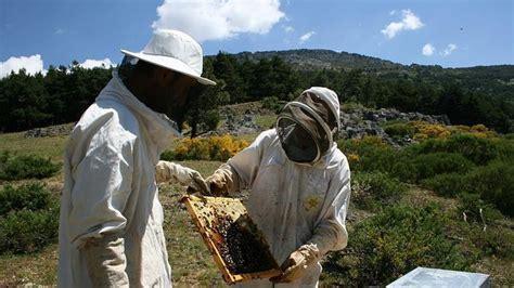 abejas  recuperar los parques hayedo de tejera negra  del alto tajo abces