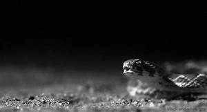 Snake GIFs - Find & Share on GIPHY