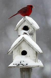 Poolabdeckung Winter Selber Bauen Wie : vogelhaus selber bauen diy bauanleitung ~ A.2002-acura-tl-radio.info Haus und Dekorationen