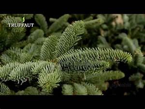 Sapin De Noel Truffaut : quel sapin de no l choisir jardinerie truffaut tv youtube ~ Farleysfitness.com Idées de Décoration