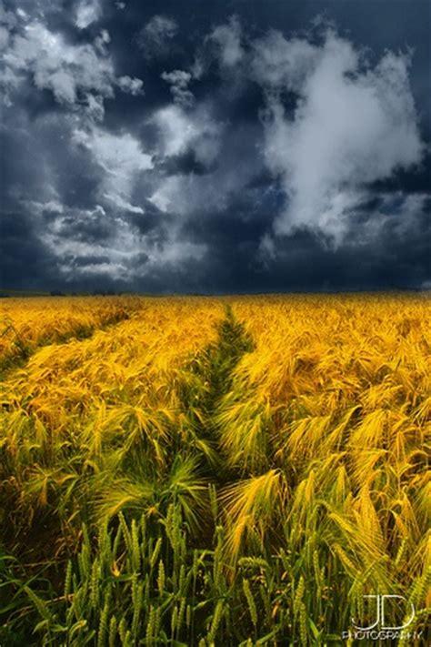 28 Best Wheat Fields Images On Pinterest