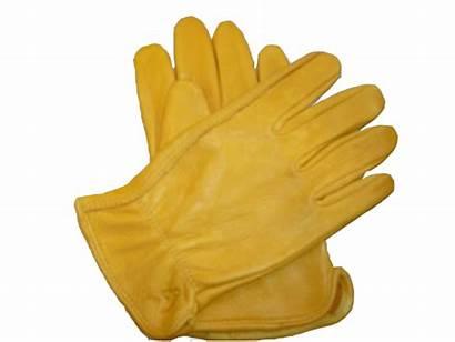 Gloves Glove Clipart Transparent Mittens Background Yellow