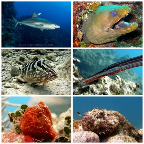lionfish cornetfish eats grouper hunting frogfish sharks eels scorpionfish picmonkey collage