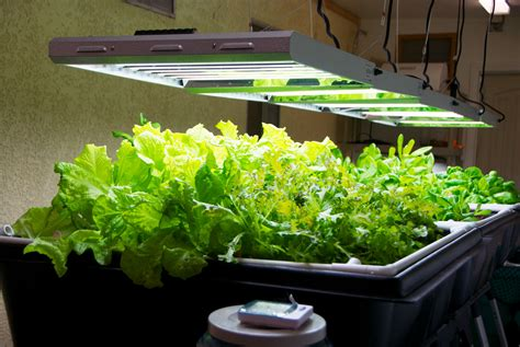 growing vegetables indoors with led lights it s a complete indoor system ready to plug in grow