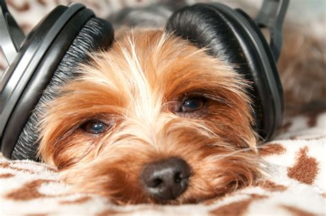 nuvet labs dog facts  tips  dog