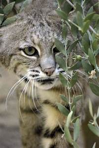 Living Desert Zoo For Excitement Filled Experience In