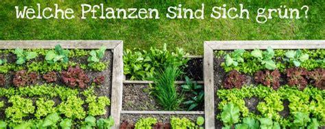 Welche Pflanzen Sind Sich Grün?