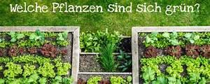 Warum Sind Pflanzen Grün : gute nachbarn welche pflanzen sind sich gr n ~ Markanthonyermac.com Haus und Dekorationen