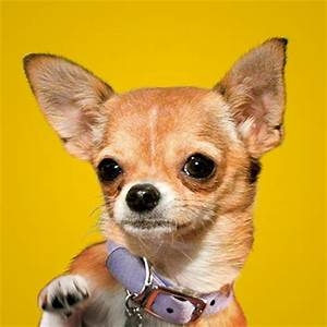 Characters | Beverly Hills Chihuahua 3 | Disney Movies