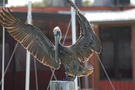 birds fishing florida trip